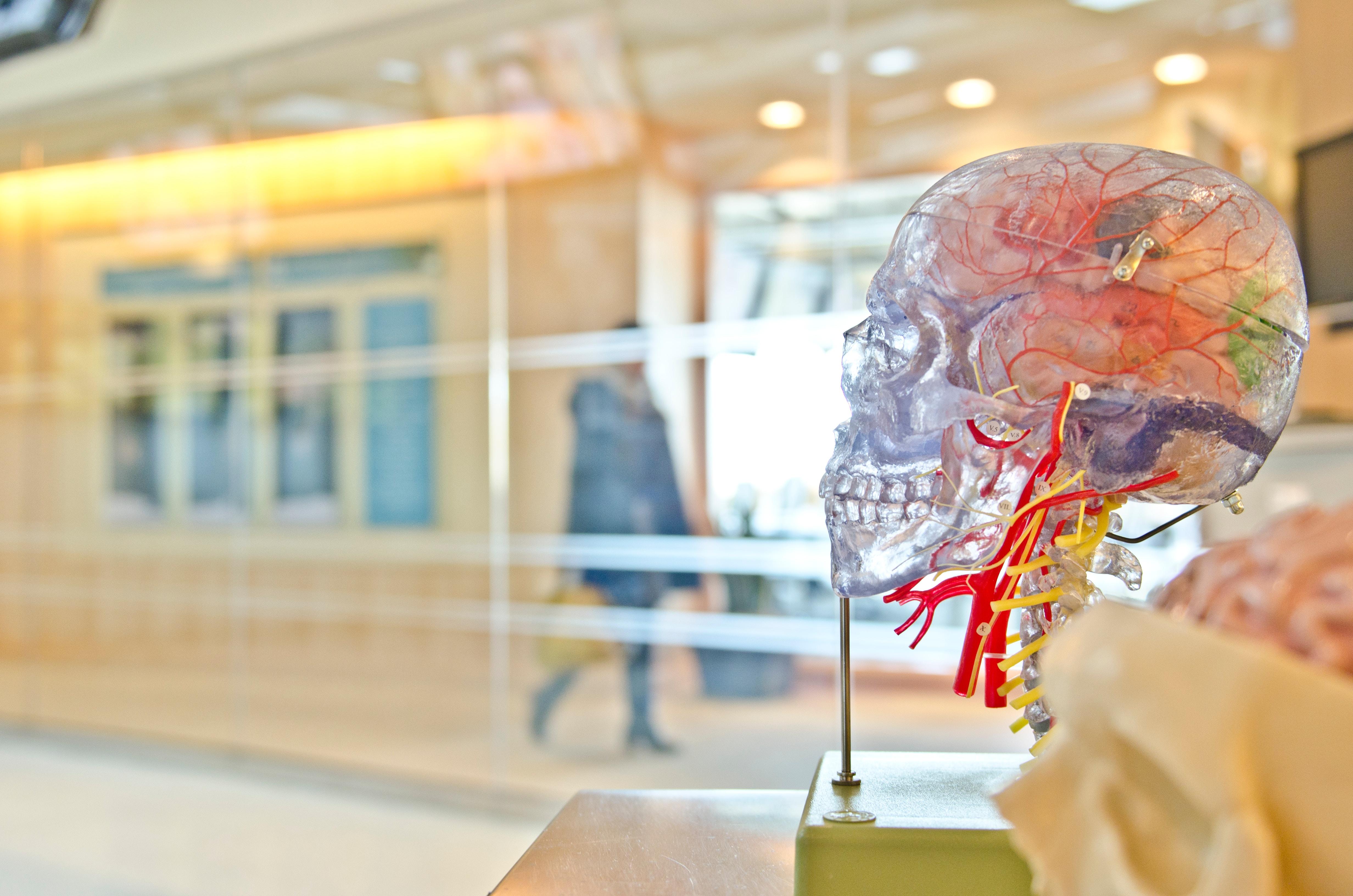Les soins chiropratiques améliorent la fonction du cerveau - Précision Chiropratique